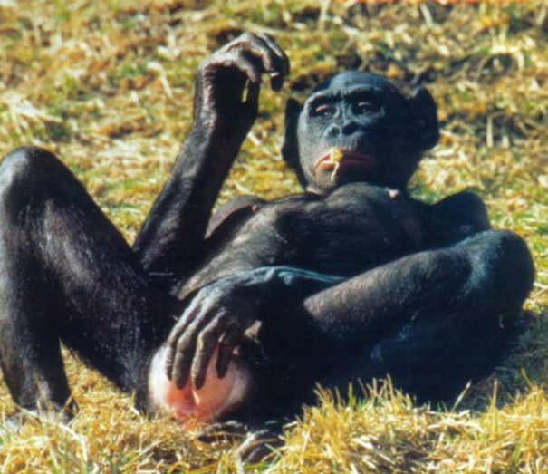 Numerek w krzaczkach? Nie - masturbacja wśród zwierząt!