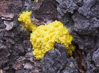 żółte.png