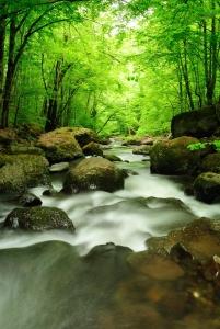 1389453_mountain_river.jpg