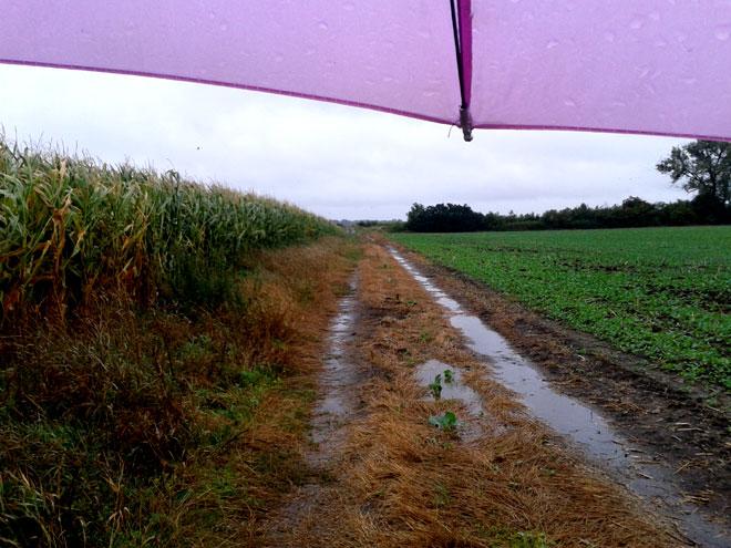 zyslowosc-parasol-pole.jpg
